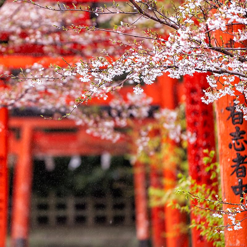 Viajes en grupo | Viajes Eurotrip Bidaiak |  Viaje en grupo a Japón