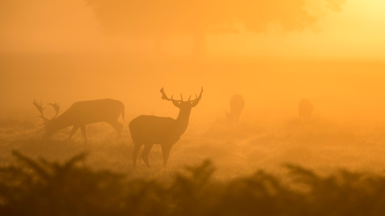 Escápate a ver la berrea del ciervo en otoño | Viajes Eurotrip