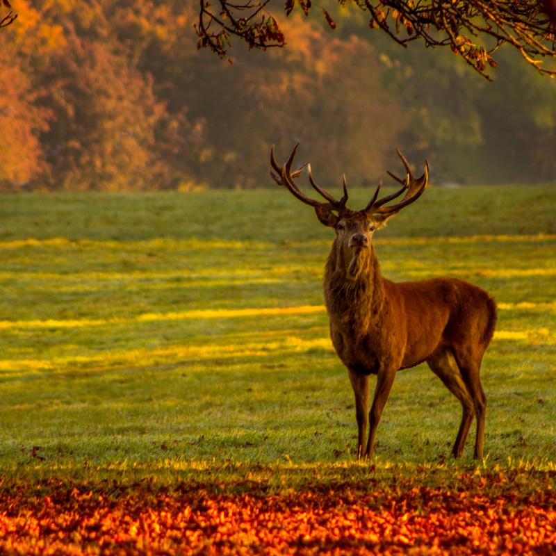 Viaje a medida: La berrea del ciervo en otoño-España