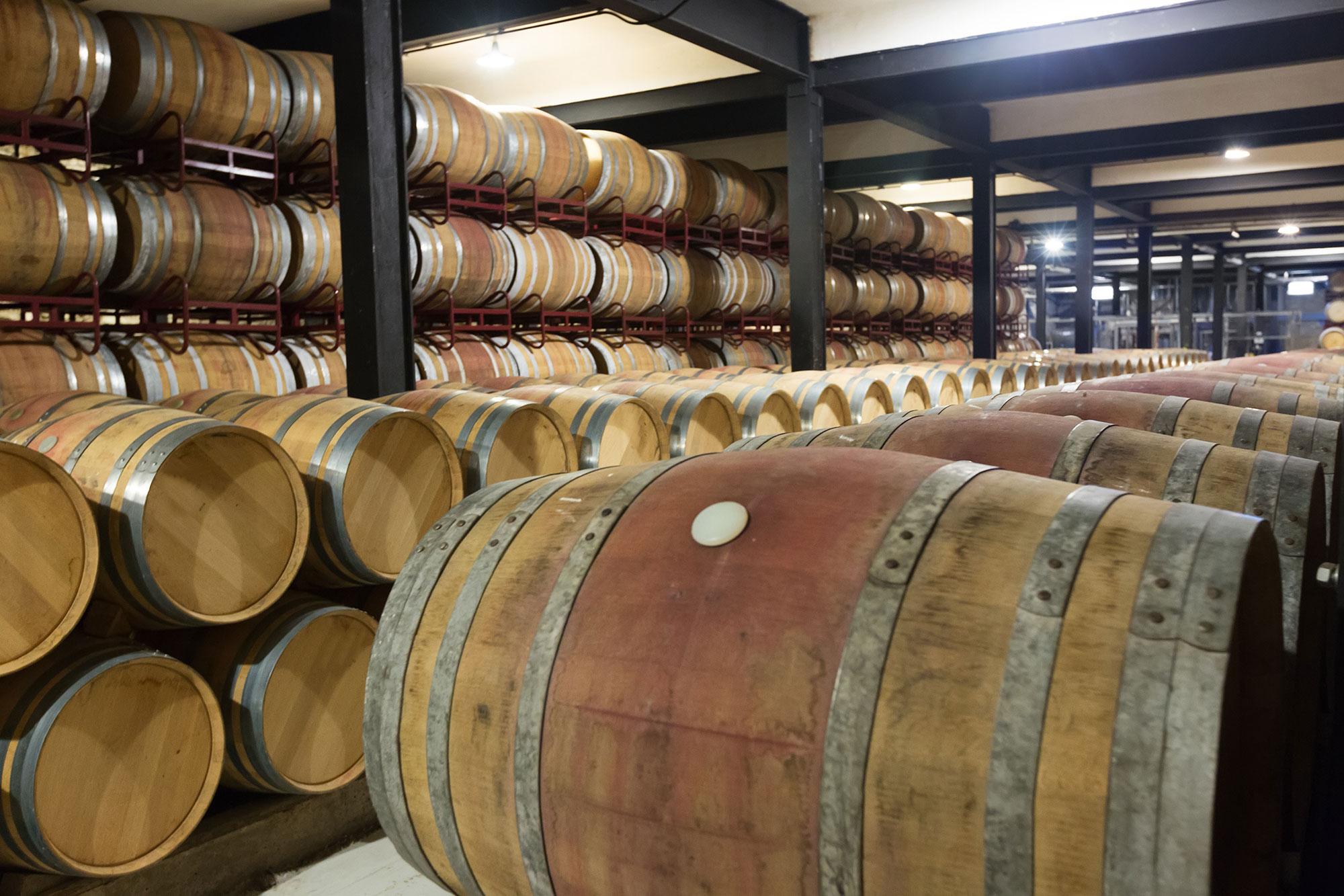 El otoño en la Selva de Irati y la Rioja alavesa - España- imagen #1