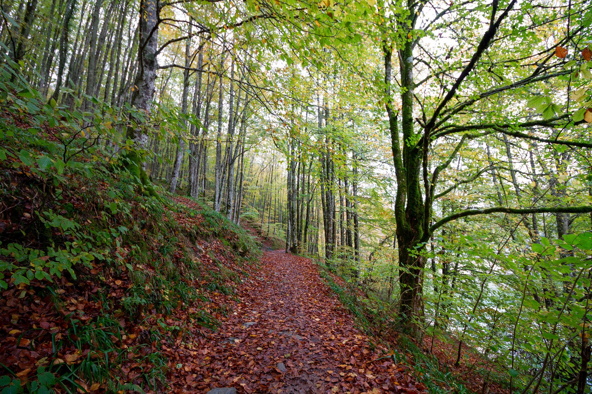 El otoño en la Selva de Irati y la Rioja alavesa - España- imagen #2