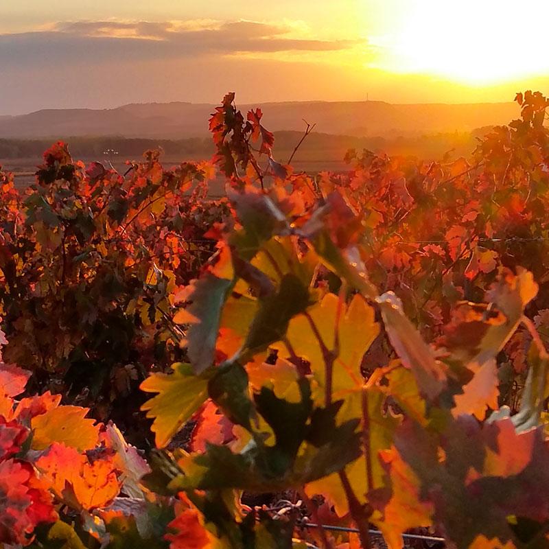 Viaje a medida: El otoño en la Selva de Irati y la Rioja alavesa-España