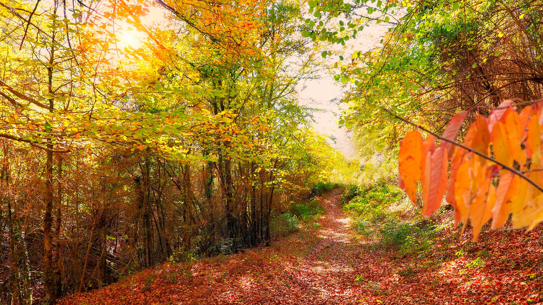Descubre la magia de la Selva de Irati en otoño | Viajes Eurotrip