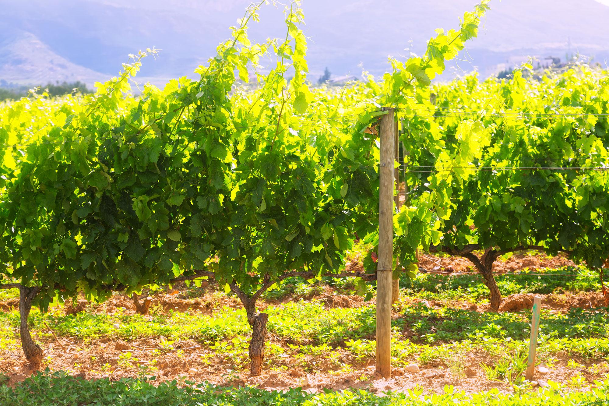El otoño en la Selva de Irati y la Rioja alavesa - España- imagen #3
