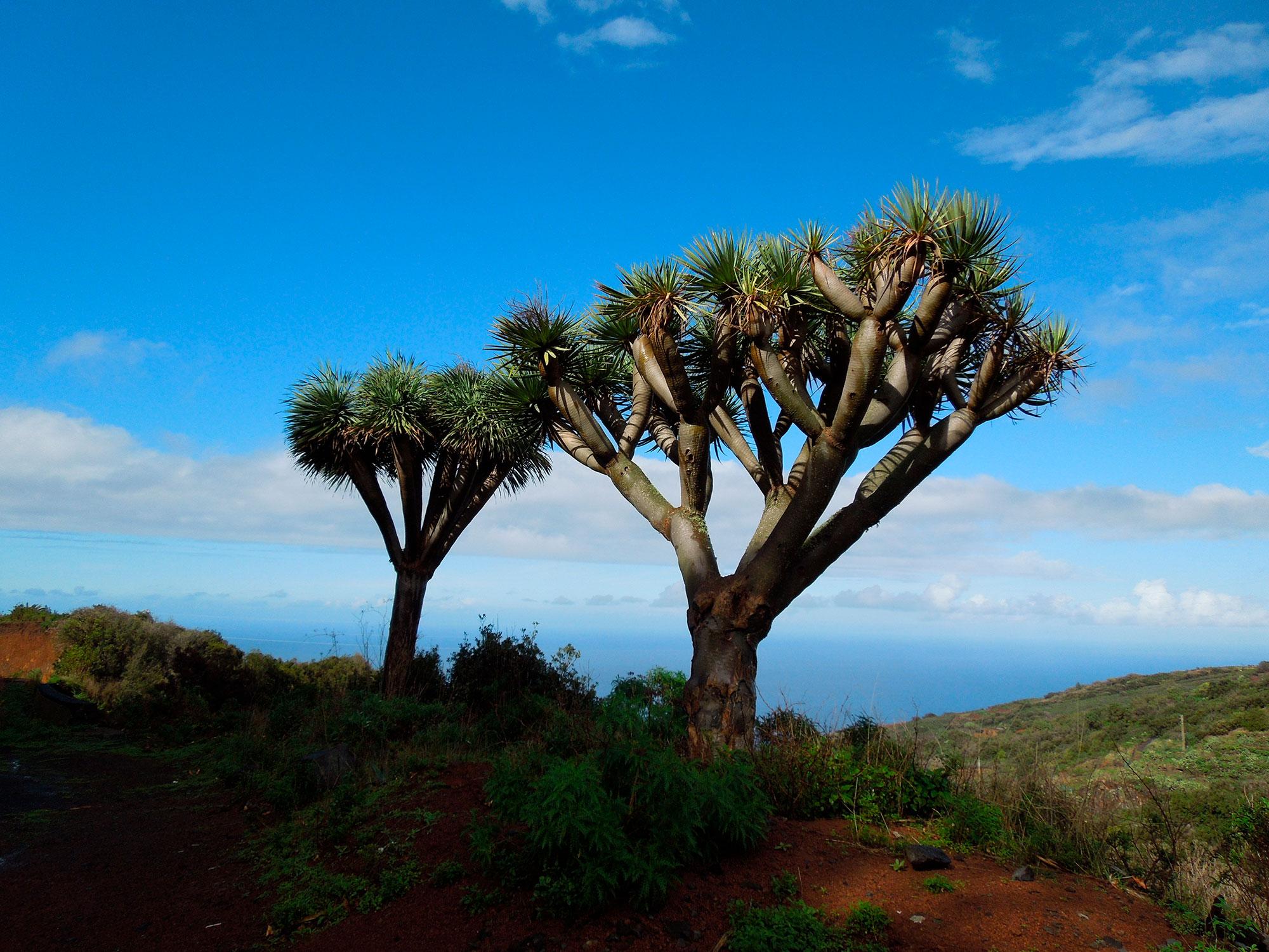 Naturaleza mágica, paisajes increibles, Islas Canarias - España- imagen #6