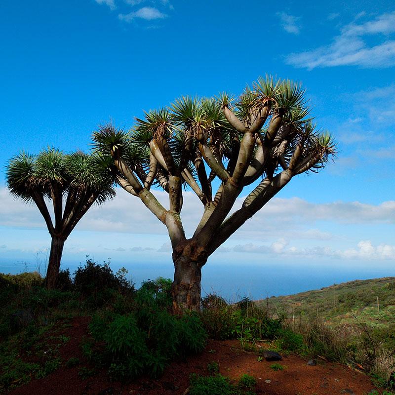 Viaje a medida: Naturaleza mágica, paisajes increibles, Islas Canarias-España