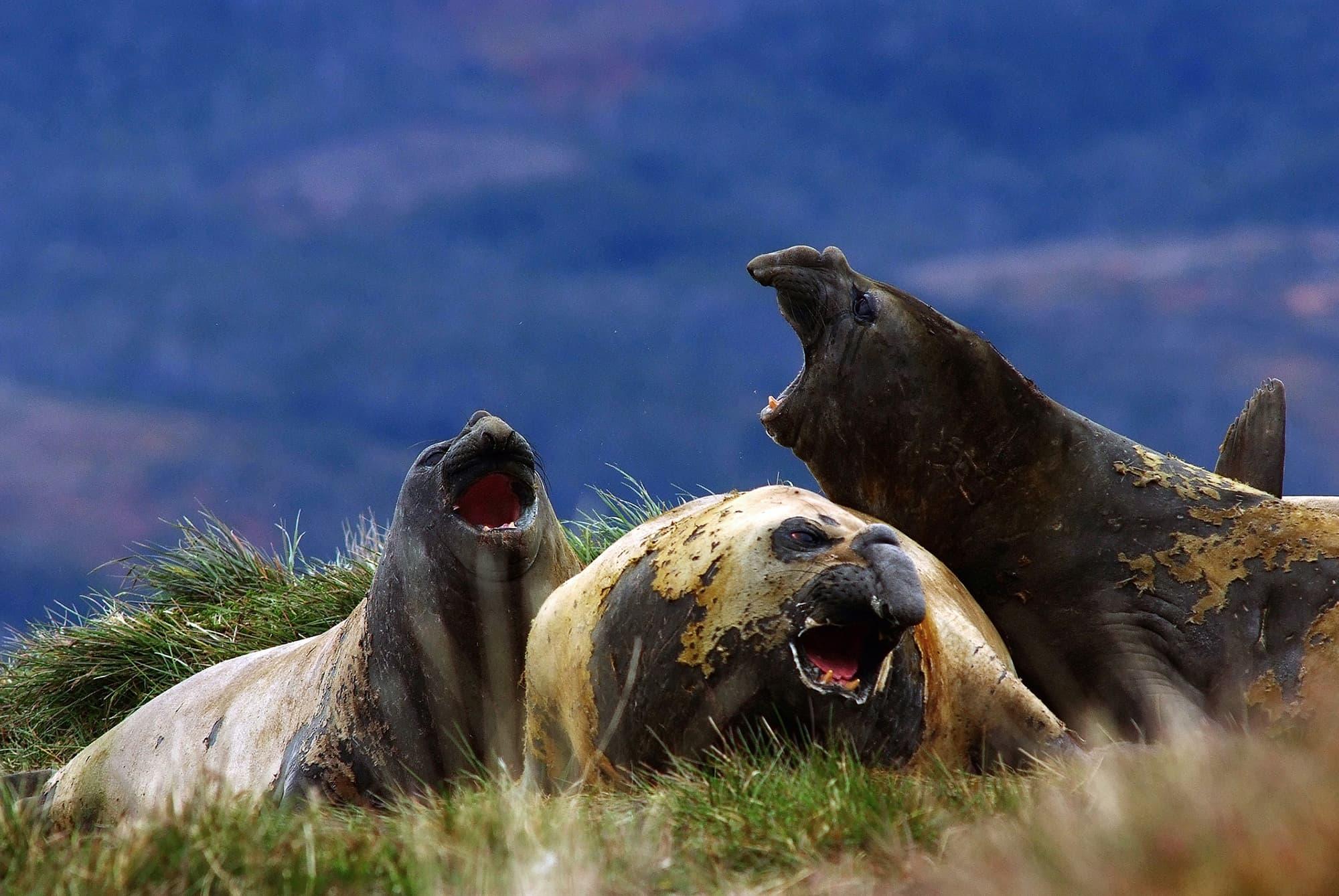 Crucero: Fiordos de Tierra del Fuego - Punta Arenas - Ushuaia - Argentina- imagen #8