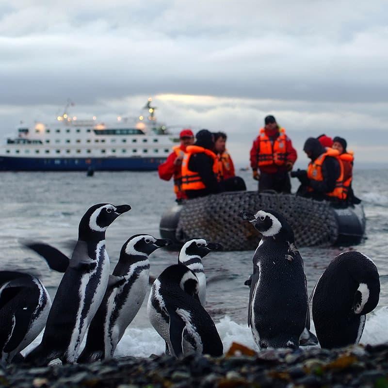 Viaje a medida: Crucero: Fiordos de Tierra del Fuego - Punta Arenas - Ushuaia-Argentina