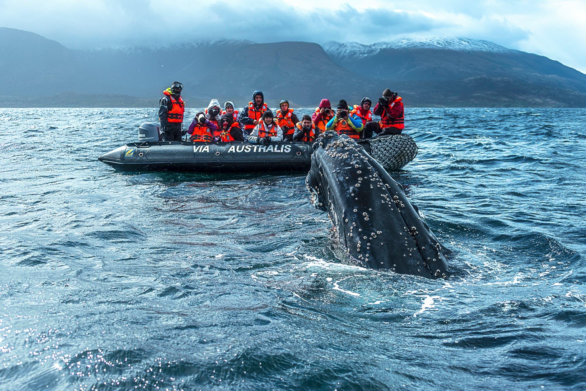 Crucero: Exploradores de la Patagonia - Ushuaia - Punta Arenas - Argentina- imagen #2
