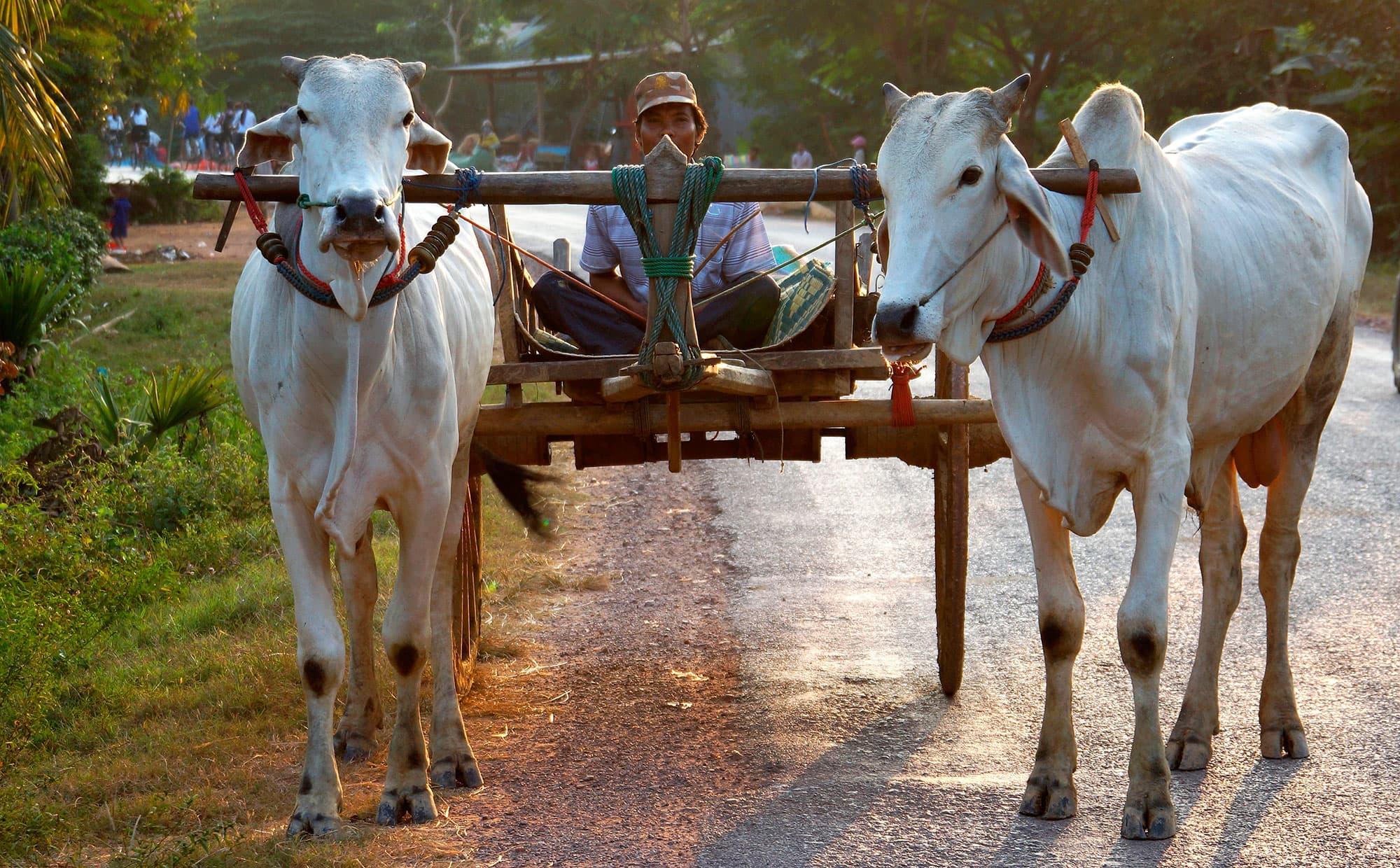 Vietnam Clásico con Camboya - Vietnam- imagen #3