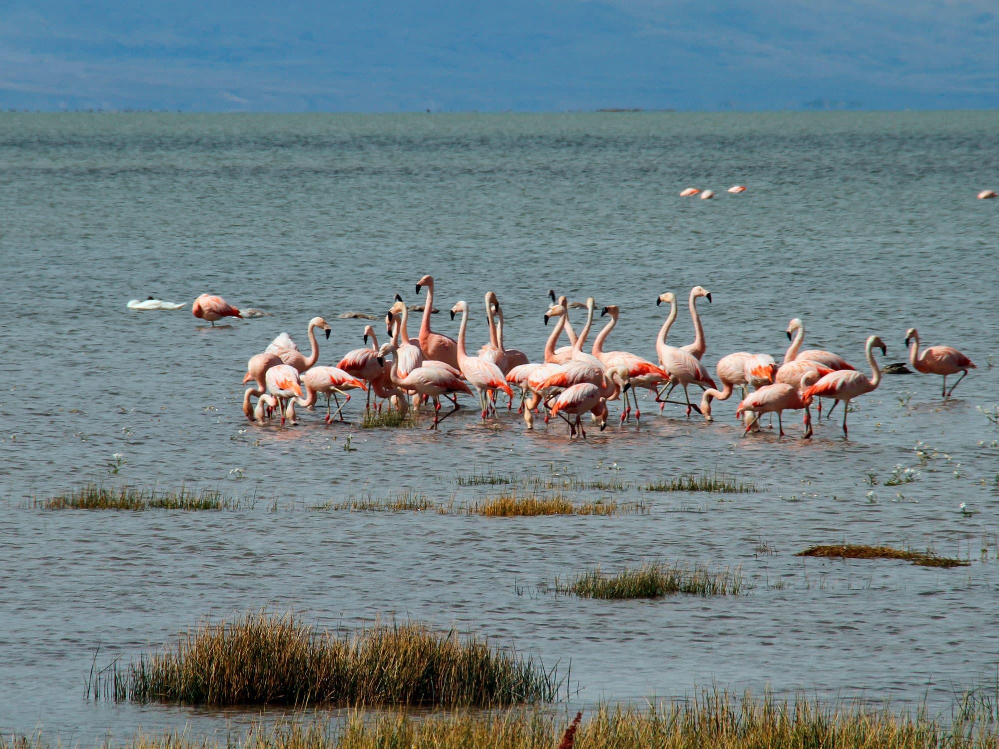 Buenos Aires, El Calafate, Ushuaia, Península Valdés e Iguazú - Argentina- imagen #1