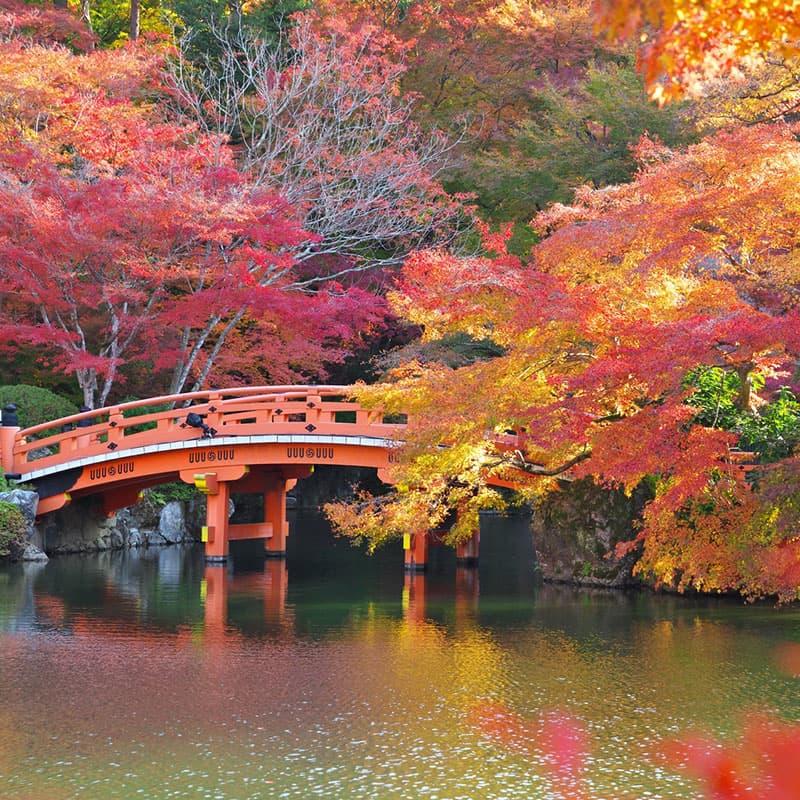 Viaje a medida: Cultura y Tradición-Japón