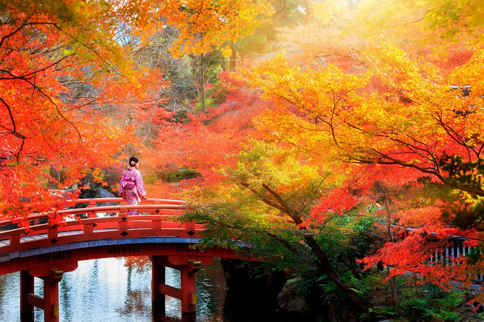 Geishas y Samurais - Japón- imagen #3