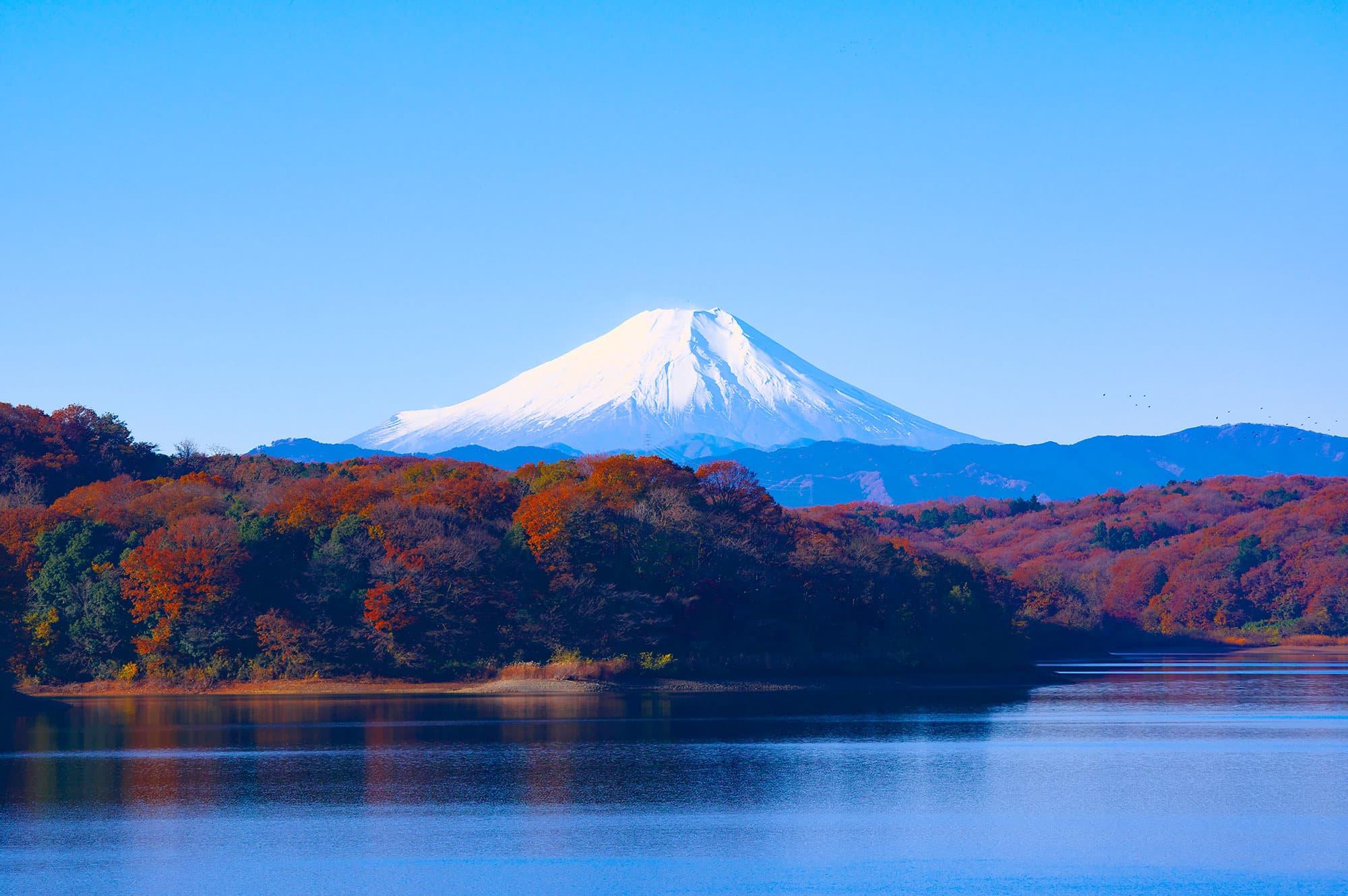 Semi Organizado II - Japón- imagen #1