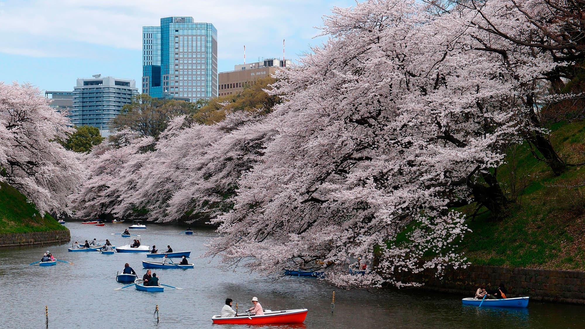Semi Organizado II - Japón- imagen #8