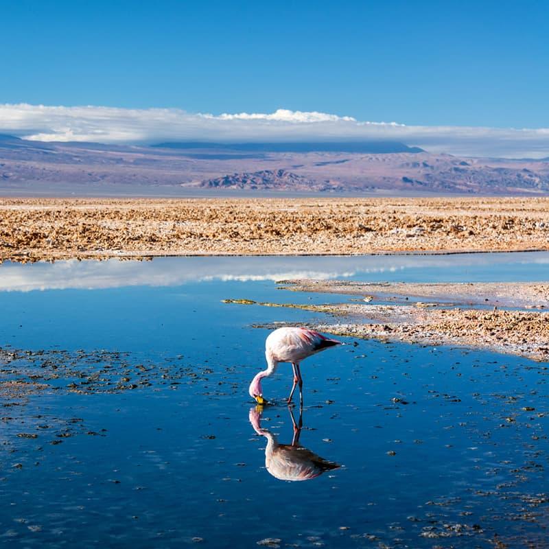 Viaje a medida: Chile y Bolivia-Chile