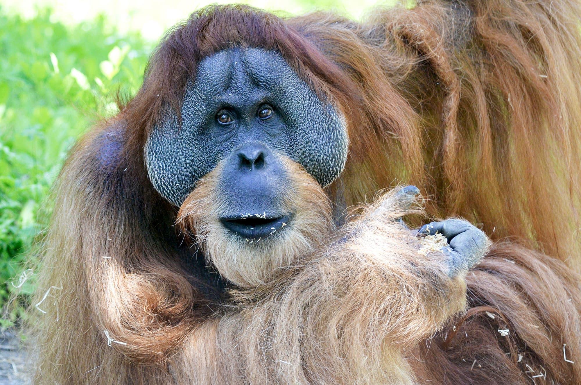 Borneo, Komodo y Bali - Indonesia- imagen #4