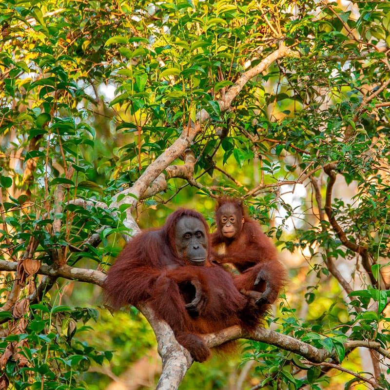 Viaje a medida: Borneo, Komodo y Bali-Indonesia