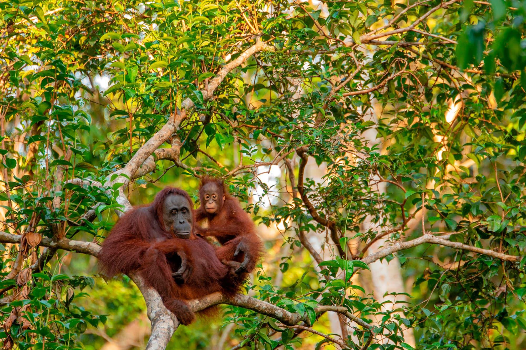 Borneo, Komodo y Bali - Indonesia- imagen #7