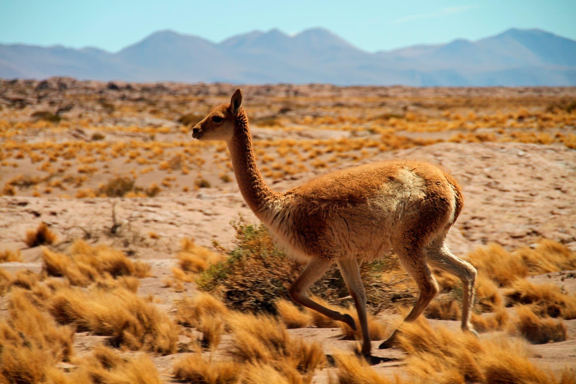 Santiago y Desierto de Atacama - Chile- imagen #2