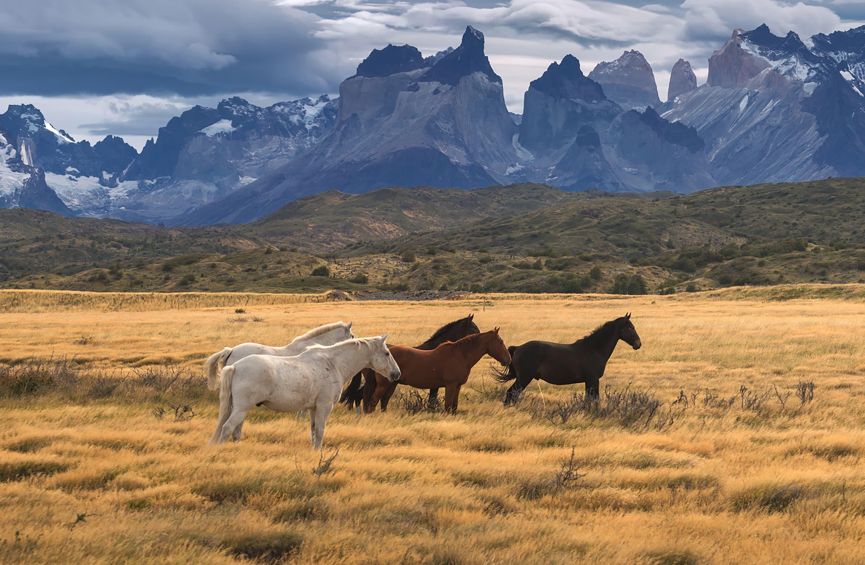 Viaje organizado a la Patagonia y Cruce Andino | Eurotrip