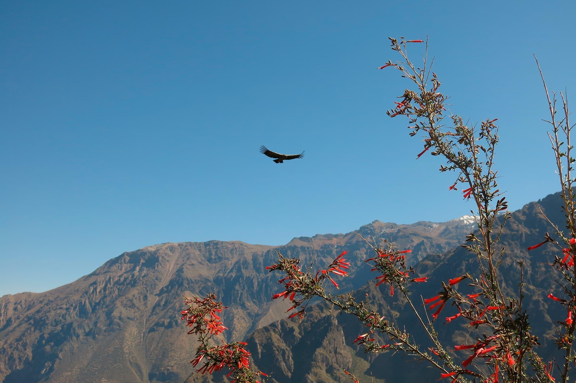 Aventura Inca - Perú- imagen #2