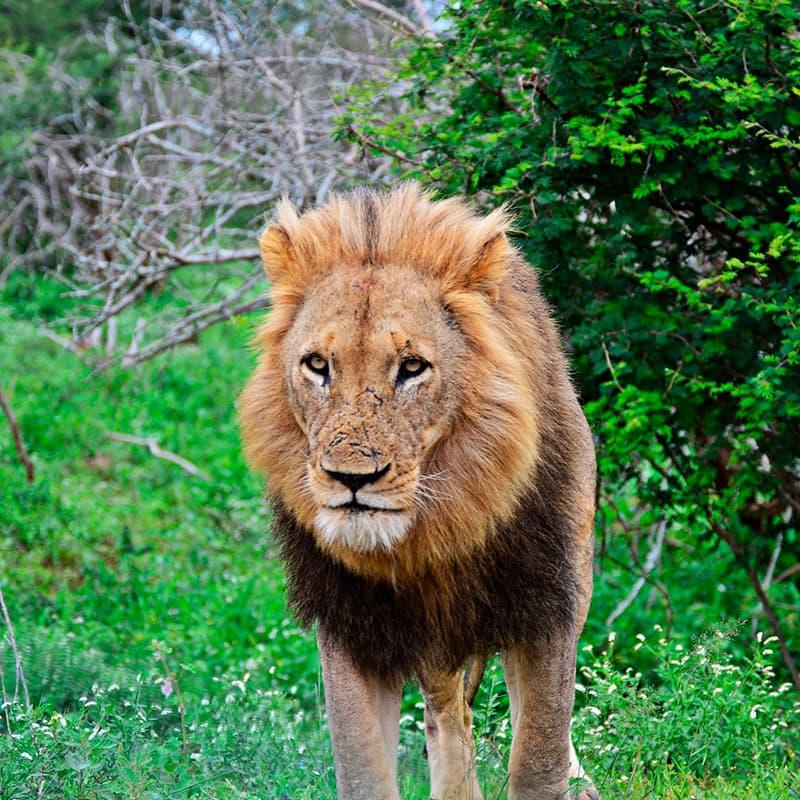 Viajes a medida | Sudáfrica en Reserva Privada Karongwe o Kapama (Safari Fotográfico)-de novios