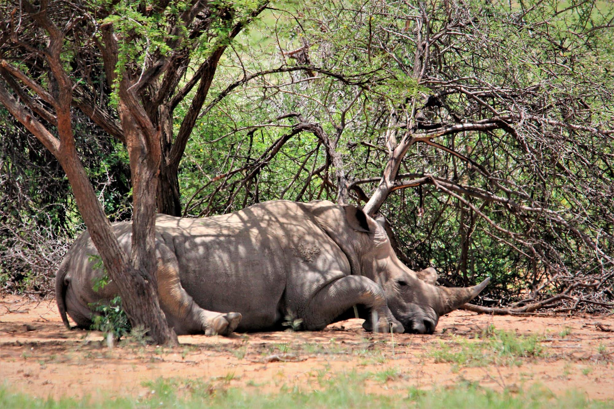 Sudáfrica en Reserva Privada Karongwe o Kapama (Safari Fotográfico) - Sudáfrica- imagen #8