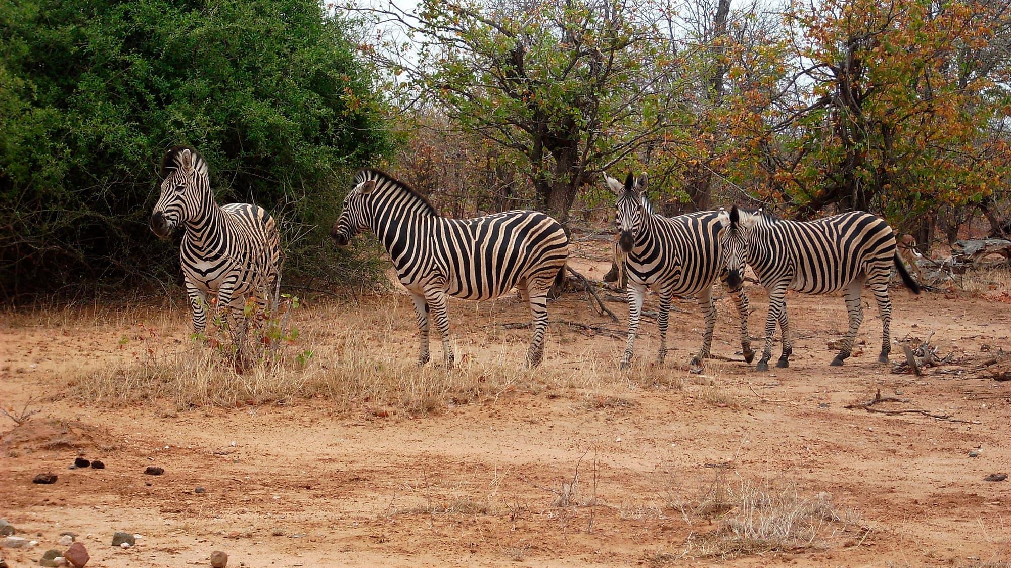 Esencia de Sudáfrica y Cataratas VIctoria - Sudáfrica- imagen #2