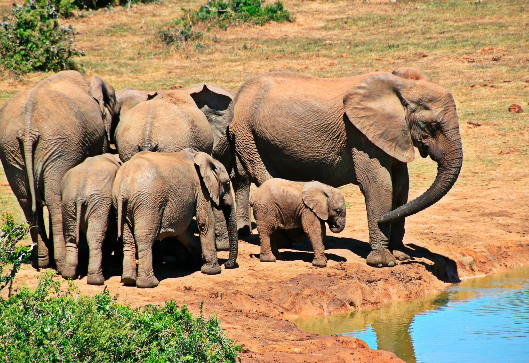 Esencia de Sudáfrica y Cataratas VIctoria - Sudáfrica- imagen #4