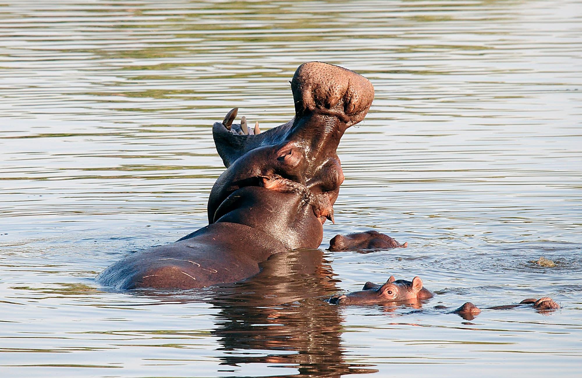 Esencia de Sudáfrica y Cataratas VIctoria - Sudáfrica- imagen #5