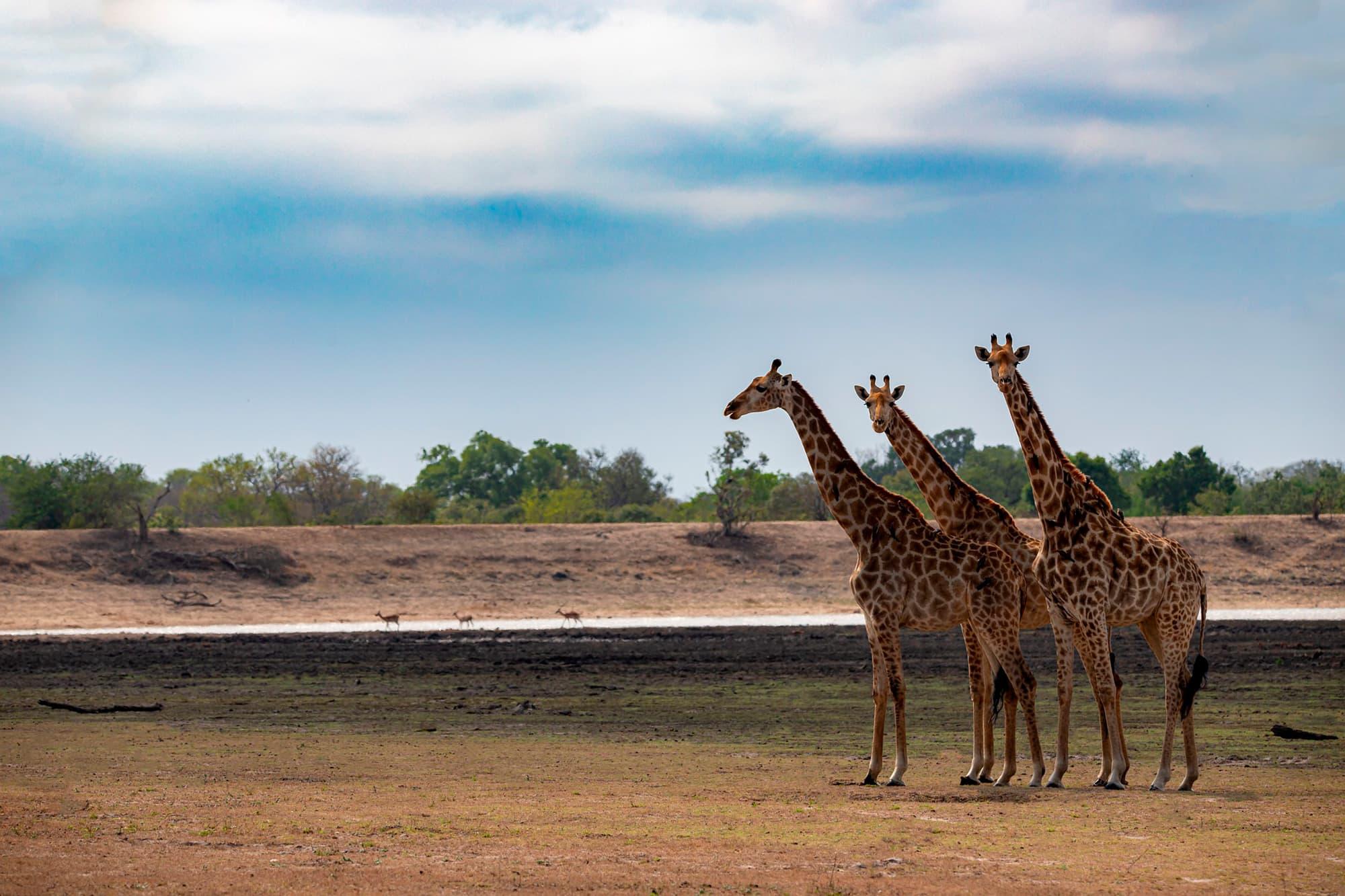 Esencia de Sudáfrica y Cataratas VIctoria - Sudáfrica- imagen #6