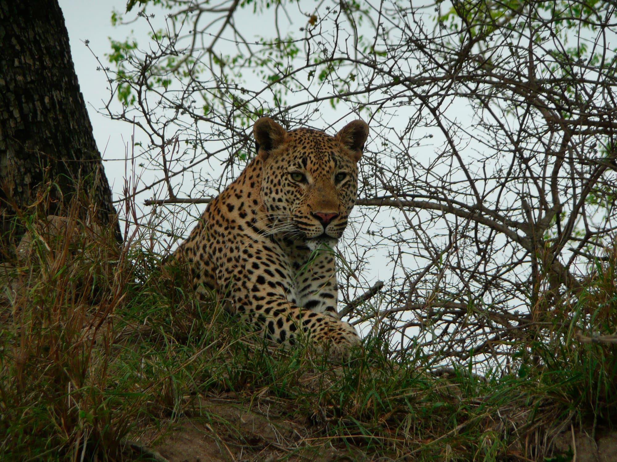 Gran Tour de Sudáfrica, Cataratas Victoria e isla Mauricio - Sudáfrica- imagen #9