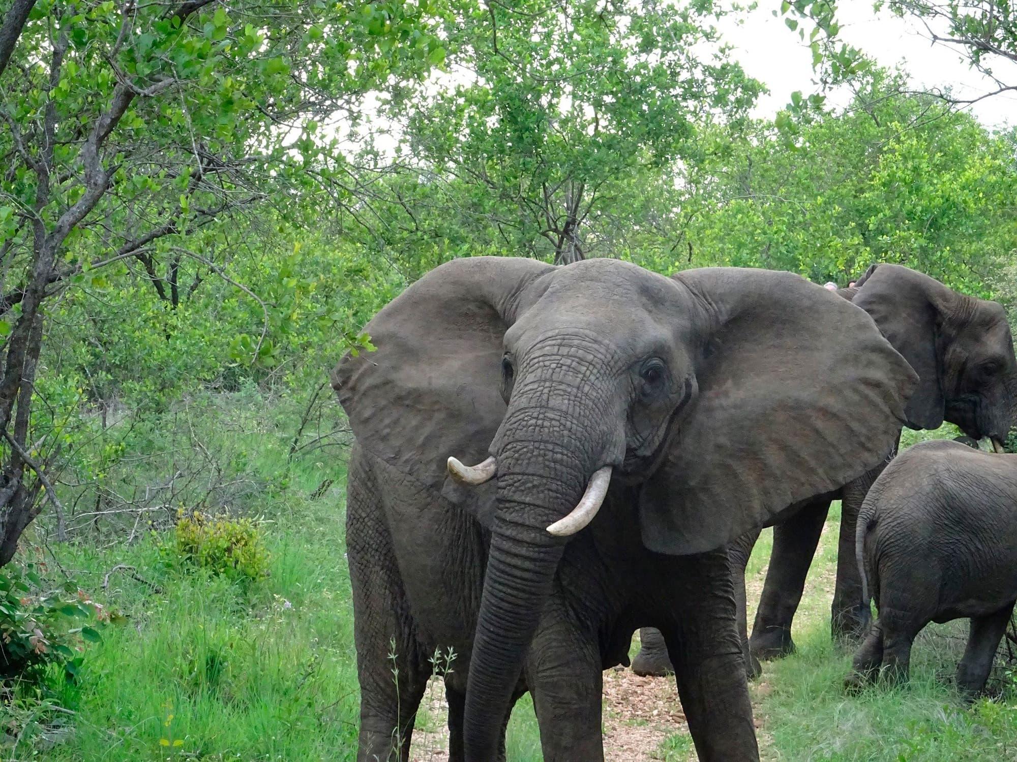 Ruta Jardín - Sudáfrica- imagen #5
