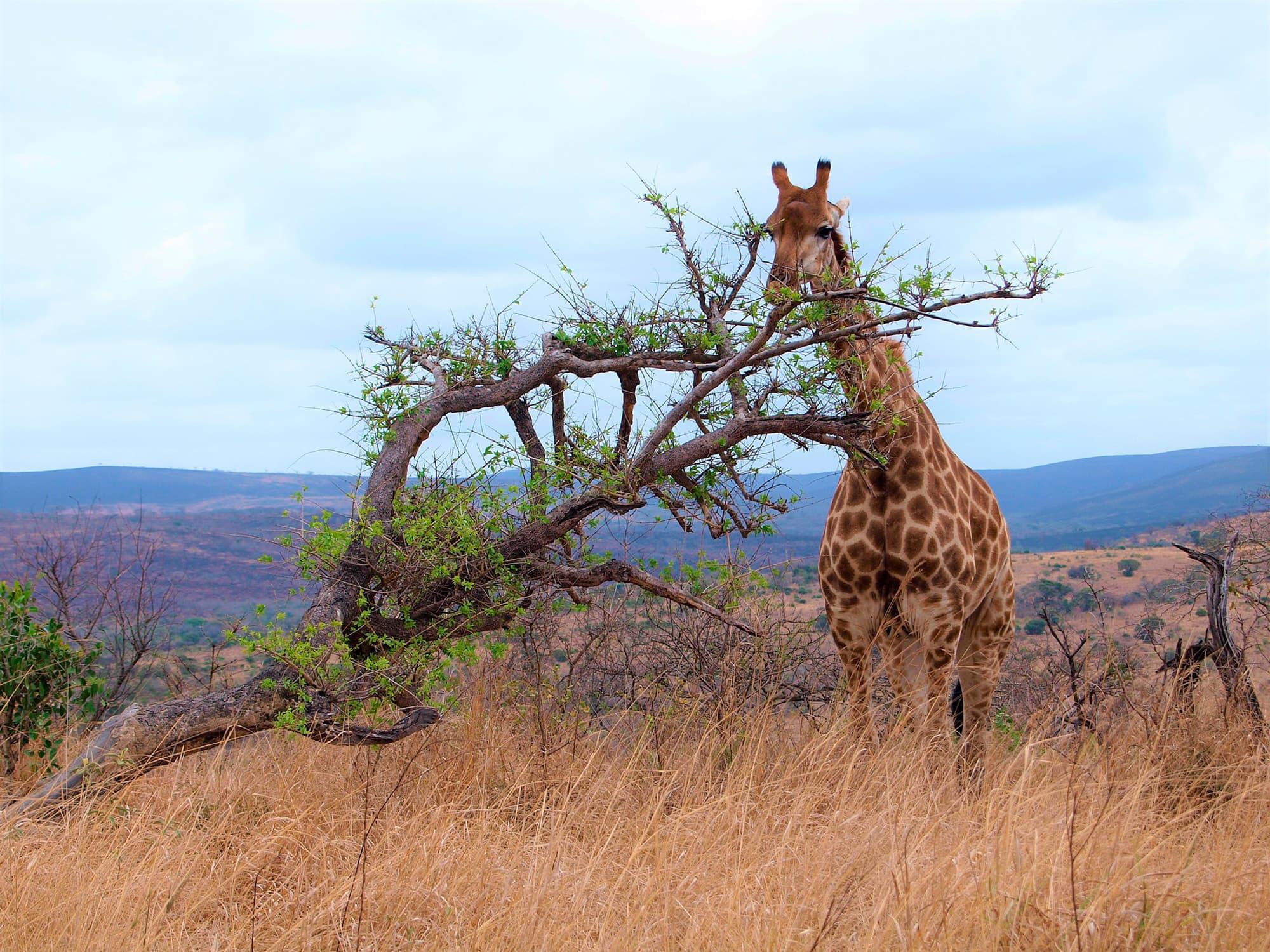 Ruta Jardín - Sudáfrica- imagen #6
