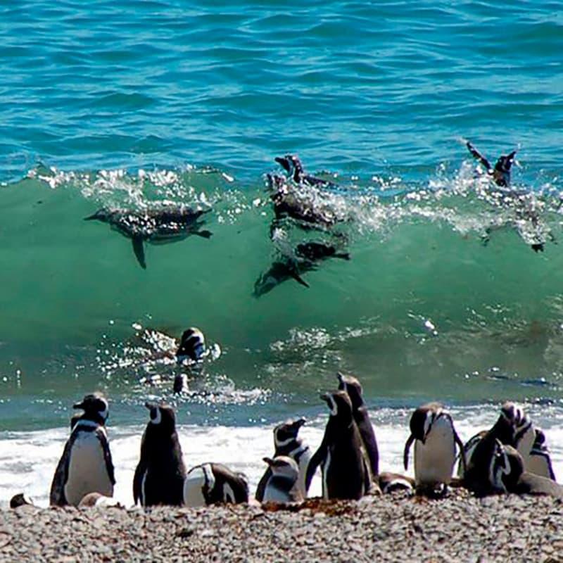 imagen noticia: Patagonia Argentina - Secreto Centenario