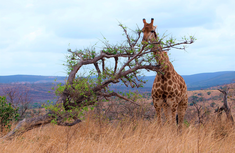 Blog Viajes Eurotrip Bidaiak: Sudáfrica, el cono sur africano
