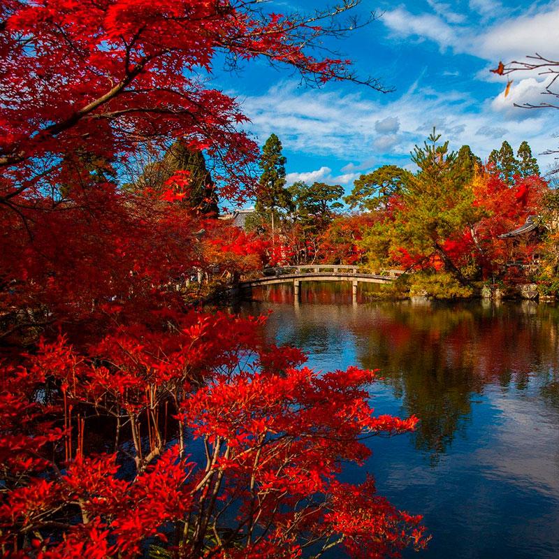 imagen noticia: Momiji en JAPÓN. Una época muy especial para viajar.